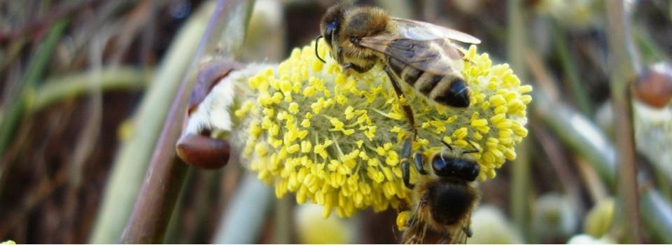 Produkty pszczele, czyli pyłek, pierzga, propolis i wosk pszczeli.